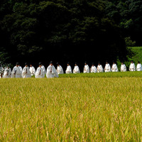 神田抜穂祭 (Ceremony of profit in rice field for Kami)